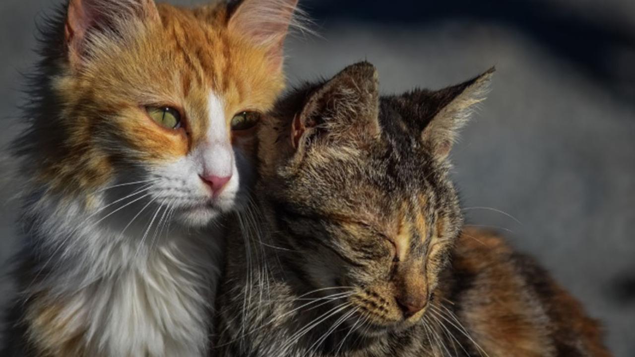 Cat dreier